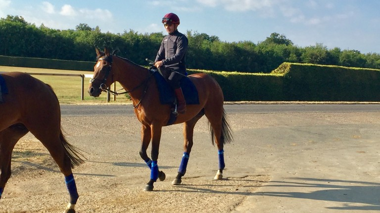Andrea Atzeni partners his Sussex Stakes mount Without Parole on the gallops in Newmarket on Wednesday morning