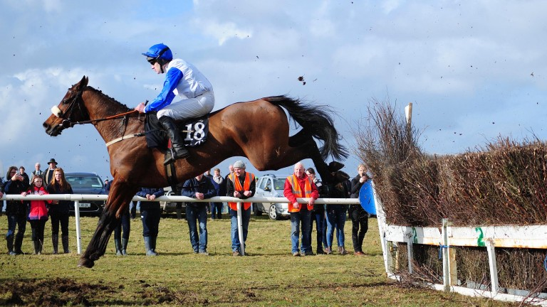 Horse racing: Warendorf, seen here winning his point-to-point at Belclare in March