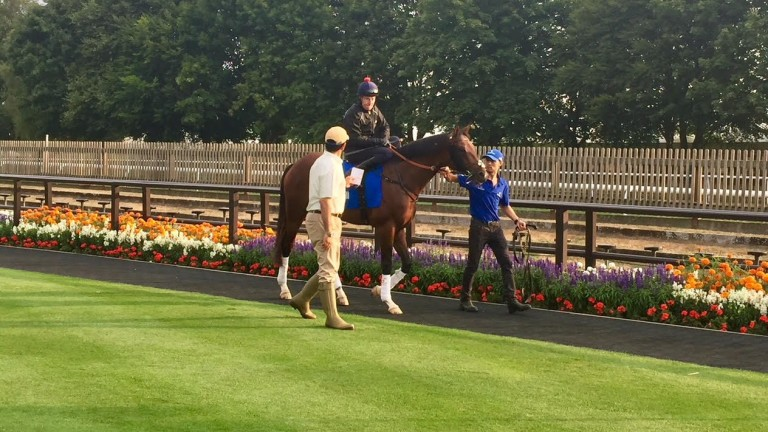 Thunder Snow: looked fresh from a near four month break since the Dubai Carnival