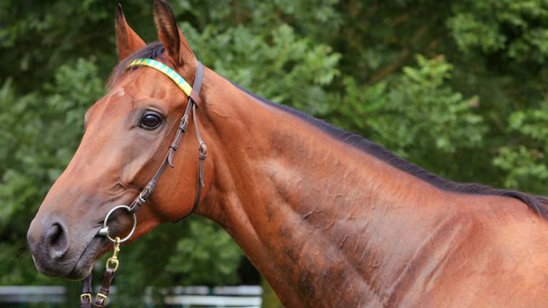 Eritage: Pornichet winner is by popular jumps stallion Martaline