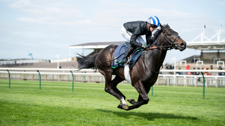 Elarqam: had an excuse for Irish Guineas flop