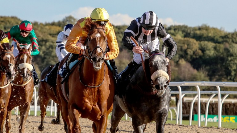 Spanish City (left): travels to Ascot for the Gigaset International in top shape