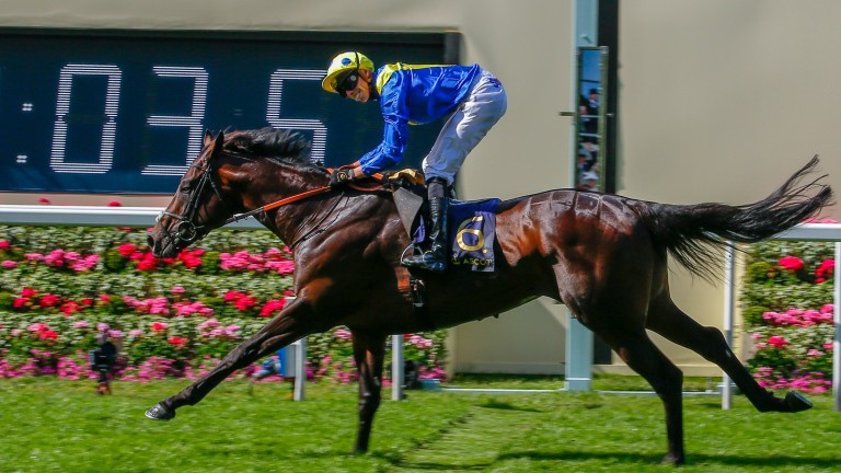 James Doyle will hope to repeat his success with Poet's Word after winning the Prince of Wales at Royal Ascot