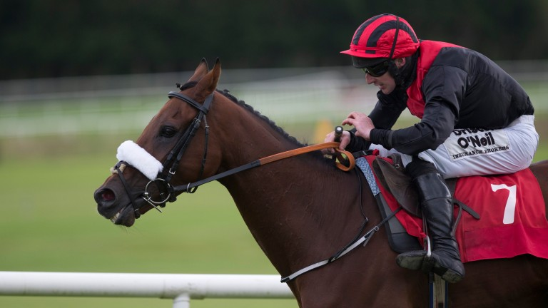 Peregrine Run: bidding for career win number 16 in the Galway Plate
