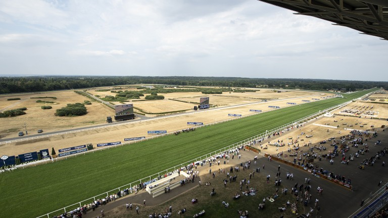 A green highway: it's golden brown all over the heath but the course has clearly been well looked after as the two-day King George meeting begins