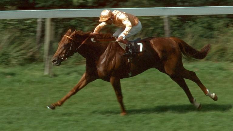 Kris winning the Sussex Stakes in 1979 under Joe Mercer