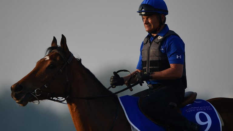 Andre Fabre and Godolphin have shown plenty of patience with five-year-old Rosa Imperial, who will be making just her eighth career start in the Prix Rothschild