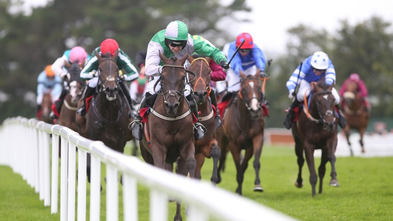 Exchange Rate, pictured winning on the Flat at Galway last year, lines up for Willie Mullins in the opening novice hurdle