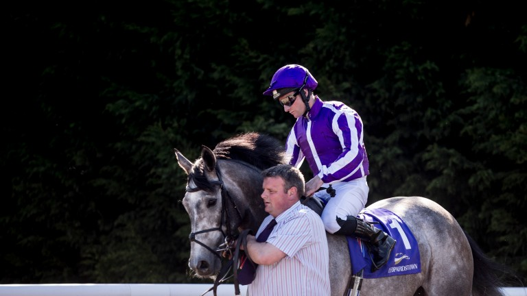 Capri: broke his maiden at the Galway Festival; can his sister do the same?