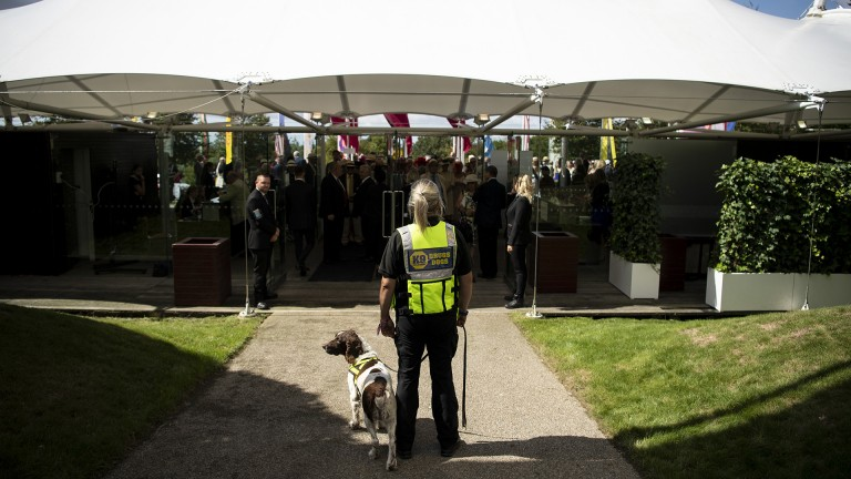 On the prowl: a sniffer dog awaits racegoers on entrance