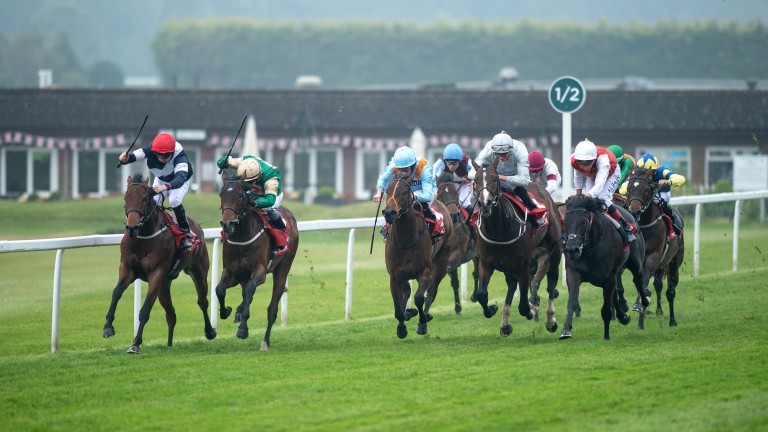 Sabre (far left) finishes second to Vintage Brut (second left) in Sandown's National Stakes