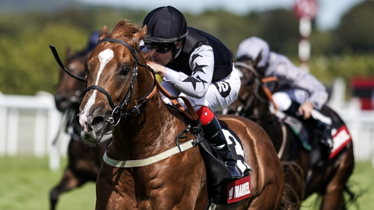 Rumble Inthejungle: a second Molecomb Stakes winner in a row out of a Dark Angel mare