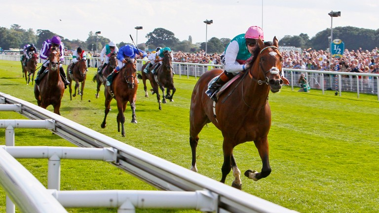 Victory stroll: Frankel wins the Juddmonte International from Farrh and St Nicholas Abbey