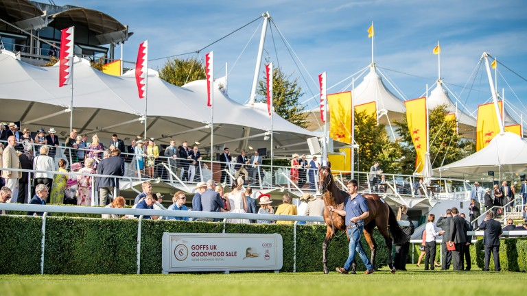 The inaugural Goffs UK Goodwood Sale drew a large crowd of onlookers
