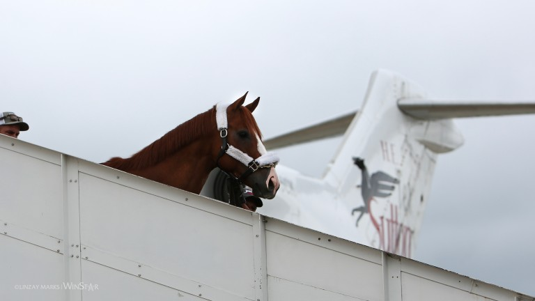 First-class passenger: Justify descends from the plane that brought him to Kentucky