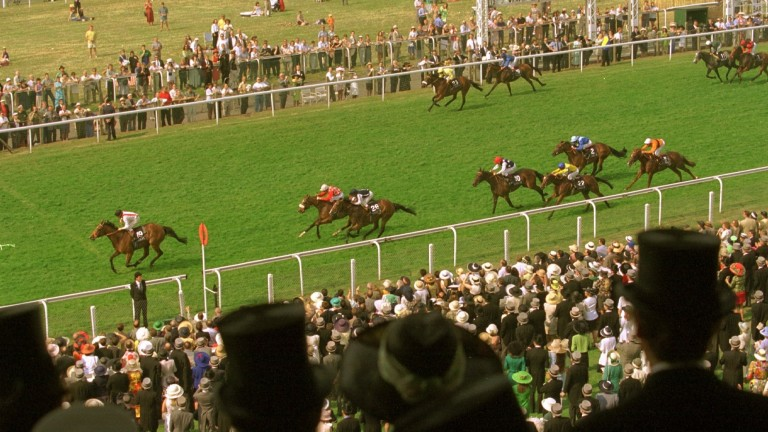Yeast: the 1996 Royal Hunt Cup winner is one of William Haggas's all-time favourite horses