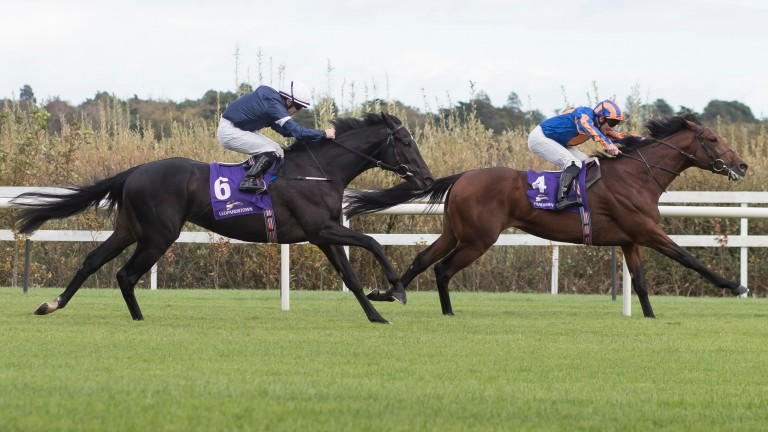 James Cook (front): Hasn't fired this season since beating Irish Derby winner Latrobe (second) in a maiden