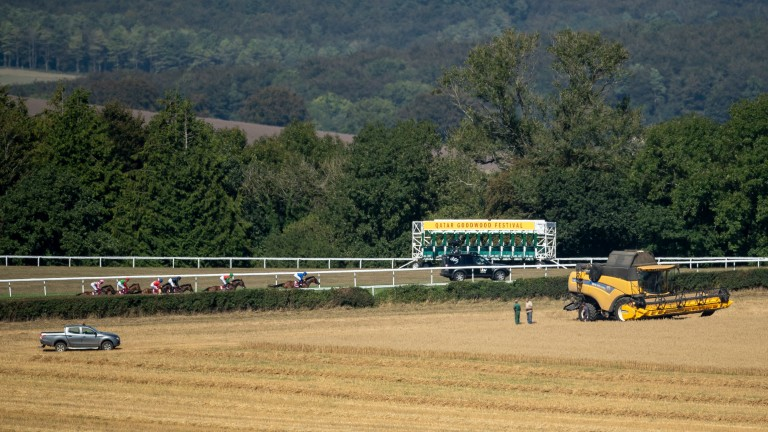 Goodwood: ground had dried out to good, good to firm in places on Thursday