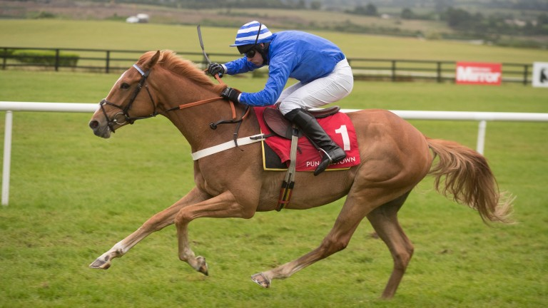 The promising Advantage Point makes his hurdling debut