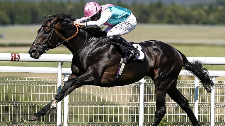 Dancing home: Mirage Dancer strides clear of his rivals to win the Group 3 Bombay Sapphire Glorious Stakes