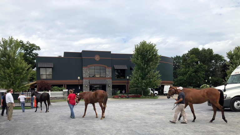 Yearlings arrive on the grounds for the Saratoga sale