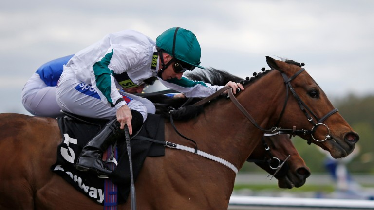 Kimberella: bounced back to form at Chester last time out