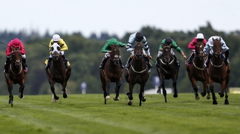 The Shergar Cup takes place at Ascot on Saturday