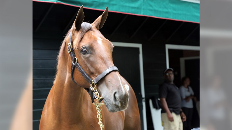 Looking good: the daughter of American Pharoah who topped the opening session in Saratoga