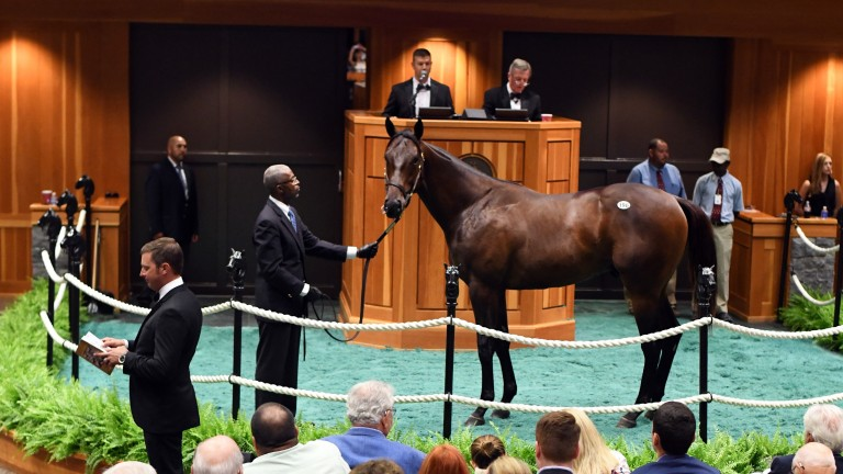 The Medaglia D'Oro colt who led Tuesday's trade at Fasig-Tipton at $1.35m