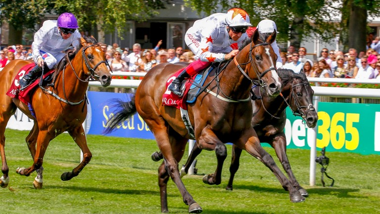 Advertise: Heads to the Phoenix Stakes at the Curragh on Sunday
