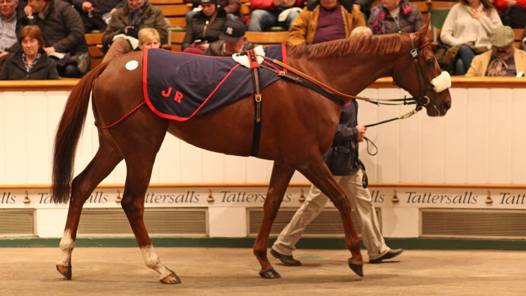 Odeliz goes through the ring at Tattersalls at the end of her racing career