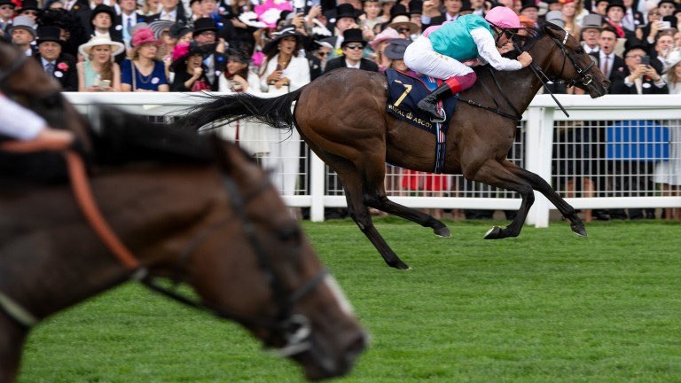 Calyx (far side) now heads the betting for the 2,000 Guineas after beating Advertise and Sergei Prokofiev in the Coventry Stakes