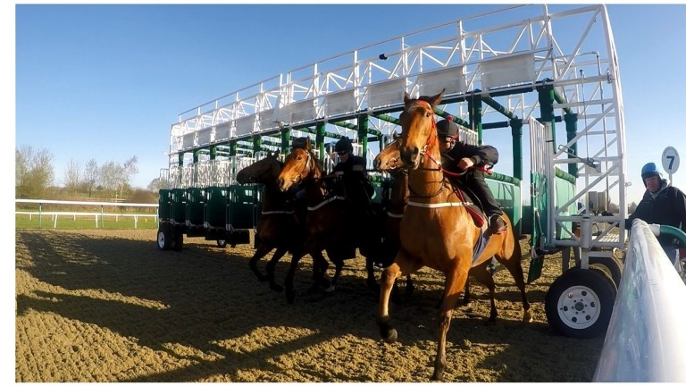 A barrier trial starts at Lingfield