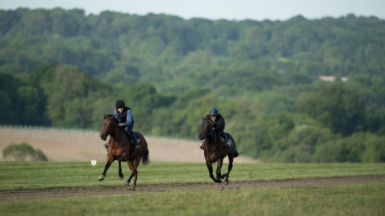 A pair of unraced 2 year olds of Simon Dow are put through their paces on the Epsom Downs gallopsEpsom 23.5.17 Pic: Edward Whitaker