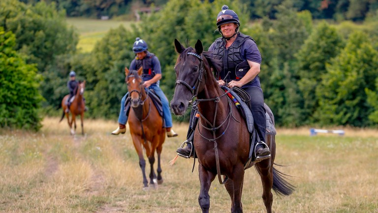Jim Boyle horses walking back in after exercising on the Epsom Downs