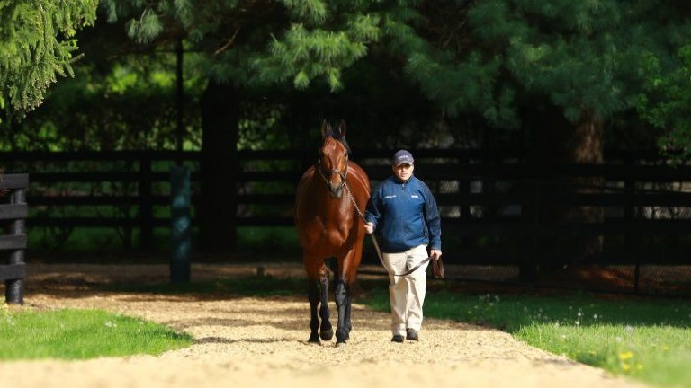 American Pharoah: one of his first-crop daughters will be offered by Monceaux at Deauville