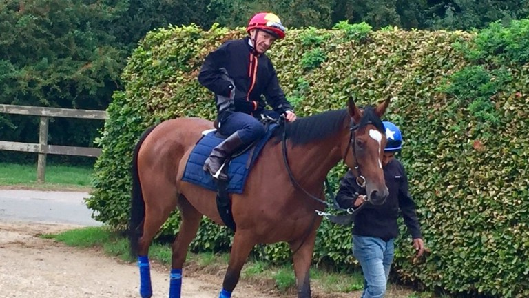Enable: will miss York and will likely head to Kempton for a prep run