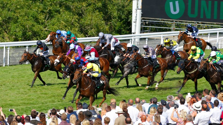 Growl finished third in this year's Stewards' Cup at Goodwood