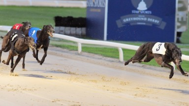 Dorotas Wildcat wins the Star Sports Greyhound Derby final at Towcester