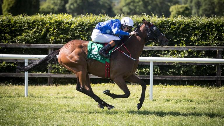 Spiral Galaxy is back from a break after Navan win