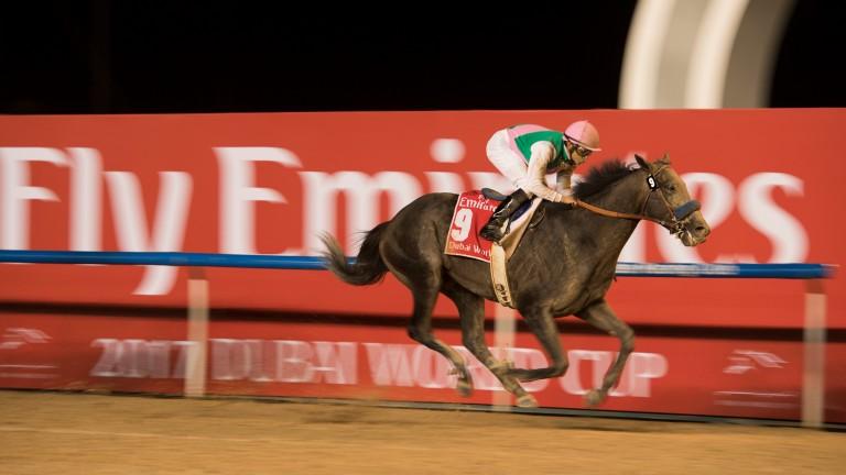Arrogate wins the Dubai World Cup