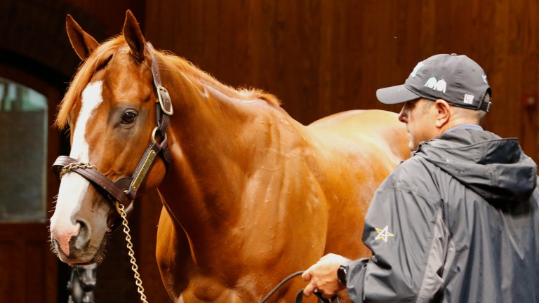 Justify has been known to bite people but is behaving himself with guests at WinStar