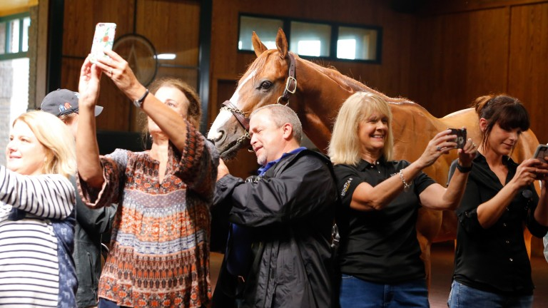 Fans can't resist a chance to get a selfie with their equine hero Justify