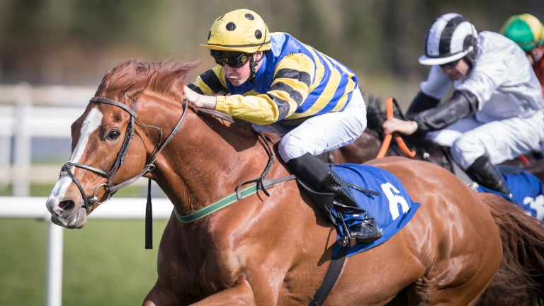 The Eoin Doyle-trained St Lawrence Gap has a good record at Thurles
