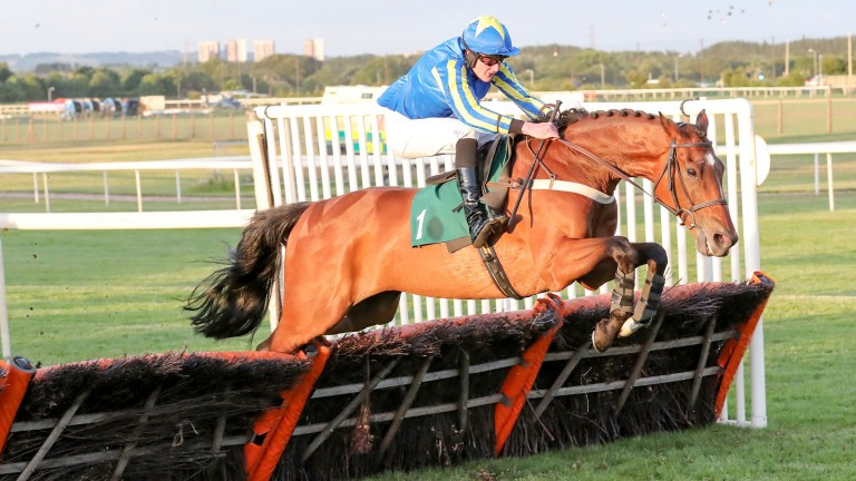 High Jinx: bids for a novice hurdle hat-trick at Market Rasen on Saturday evening