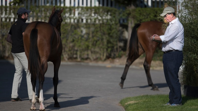 Teddy Grimthorpe inspects a yearling at the Arqana sales complex