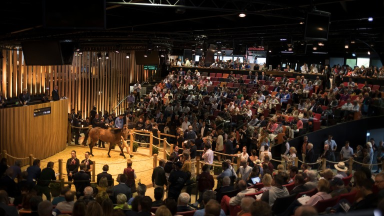 The action heats up in the Arqana sales ring