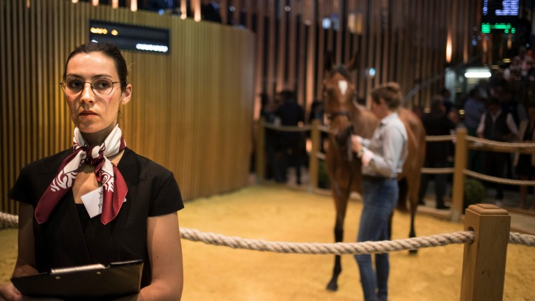 A spotter at work in the Arqana sales ring