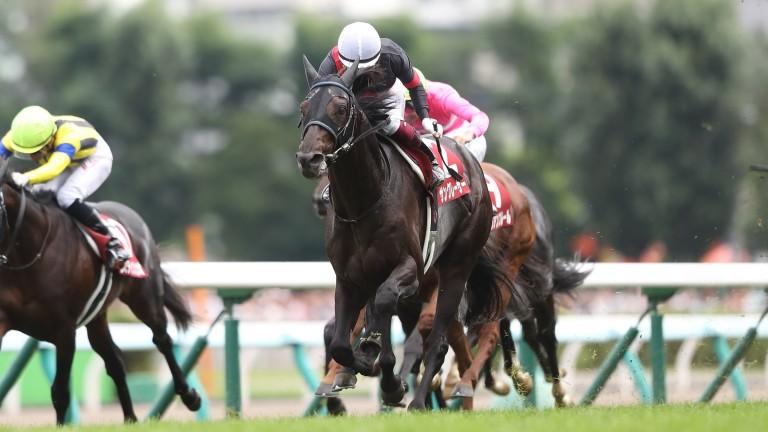 Sungrazer winning the Sapporo Kinen