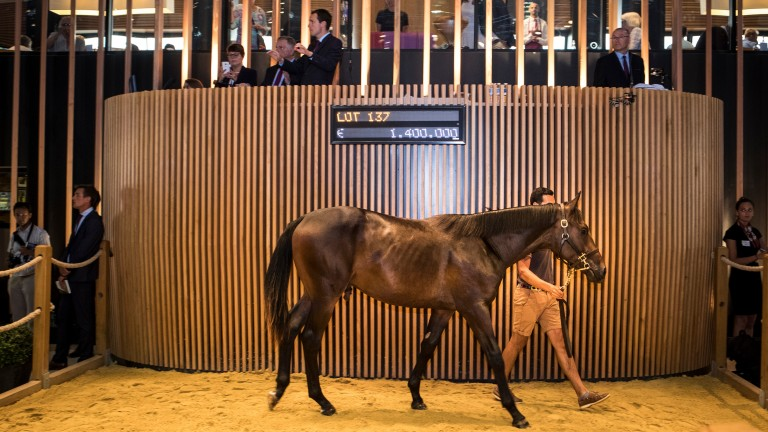 Lot 137, a Dubawi colt out of Just The Judge, sells for €1.4 million at the Arqana August Yearling sale - Photo: Patrick McCann/Racing Post